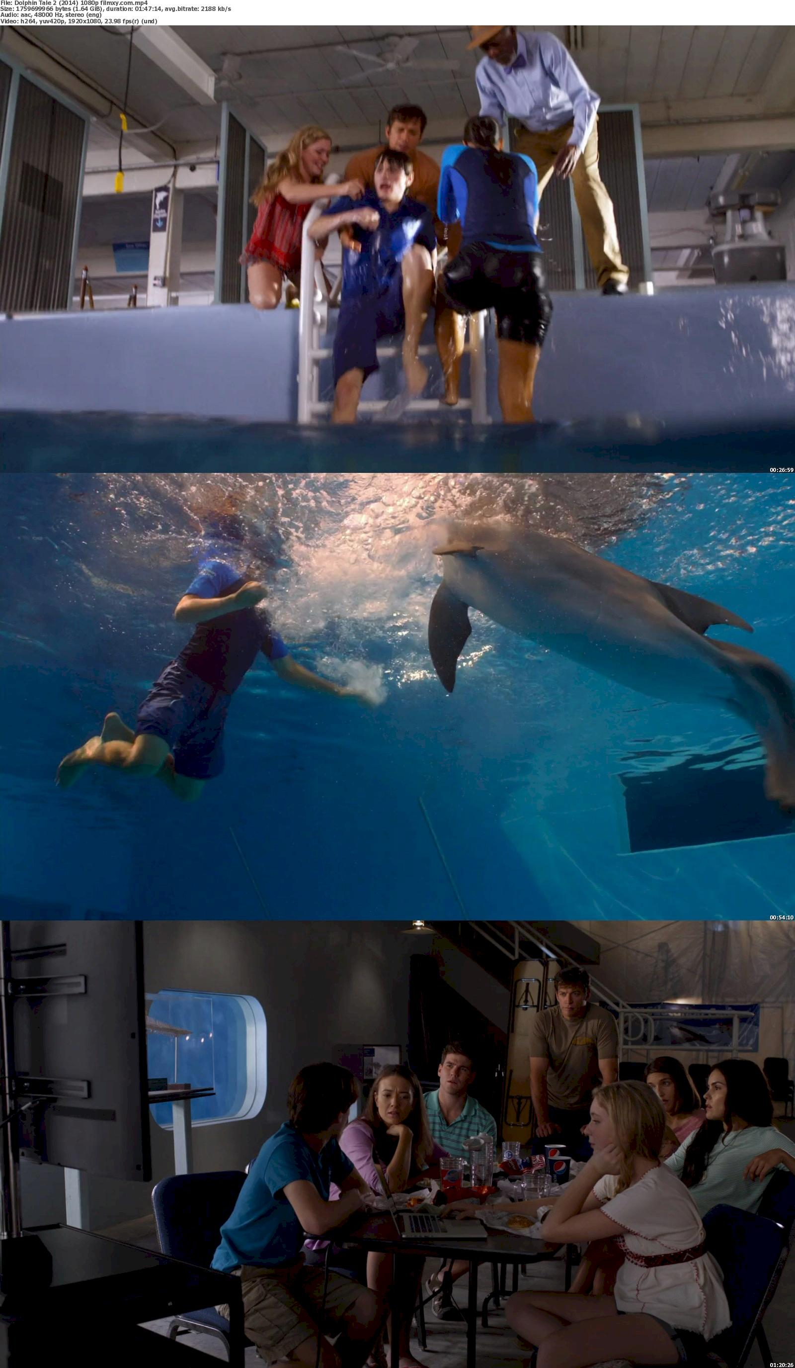 Dolphin Tale 2 (2014) 720p & 1080p Bluray Free Download 1080p Screenshot